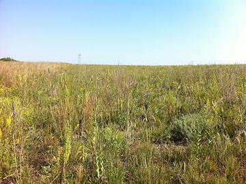 Nachusa prairie.JPG