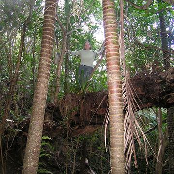 Big tree3.JPG