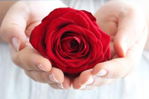 薔薇サンプル画像(手2)