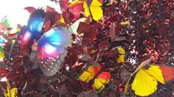 Schmetterlingsvielfalt