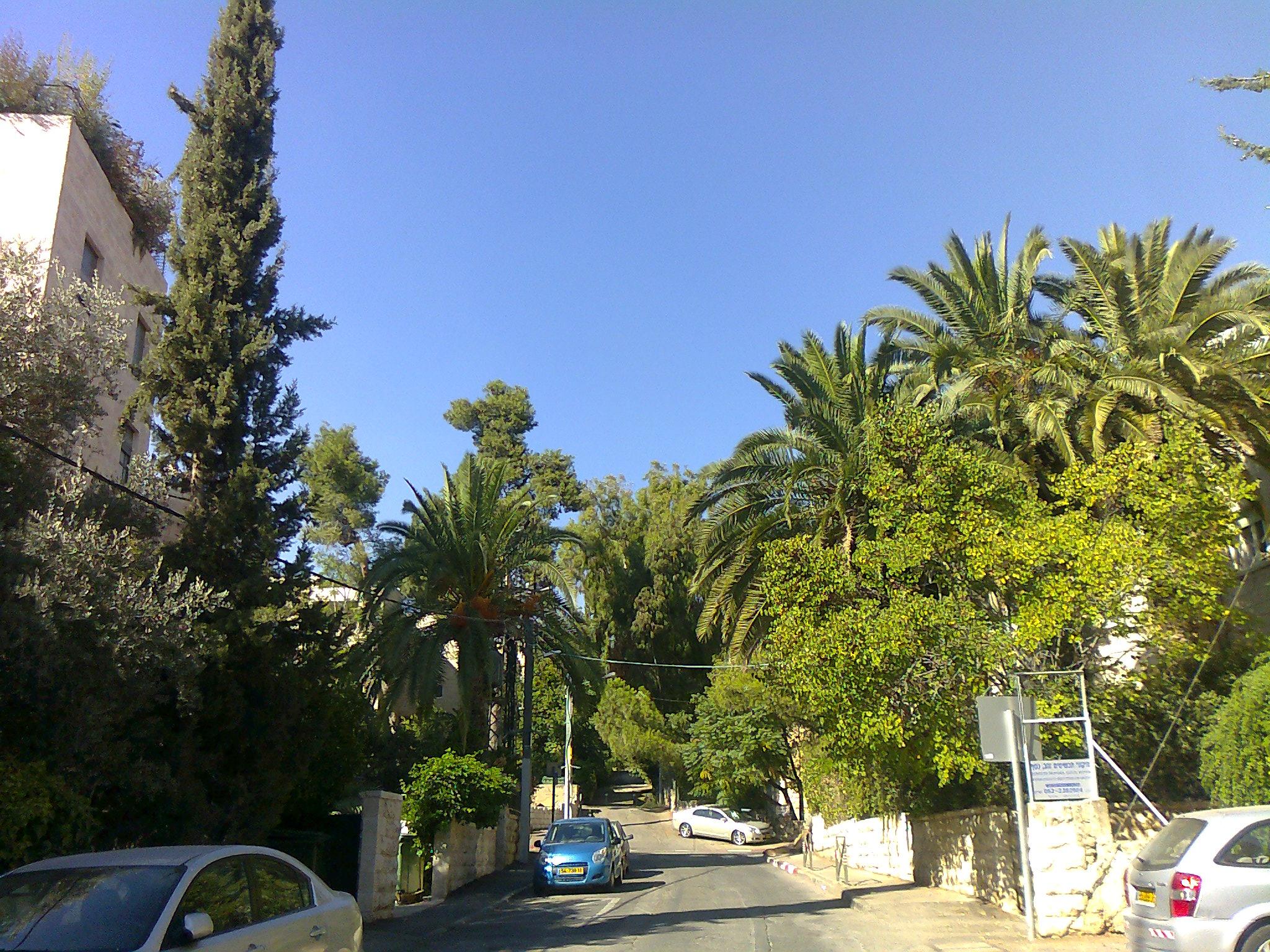 Palmen mitten in Jerusalem