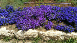 Frühlingserwachen in Jerusalem