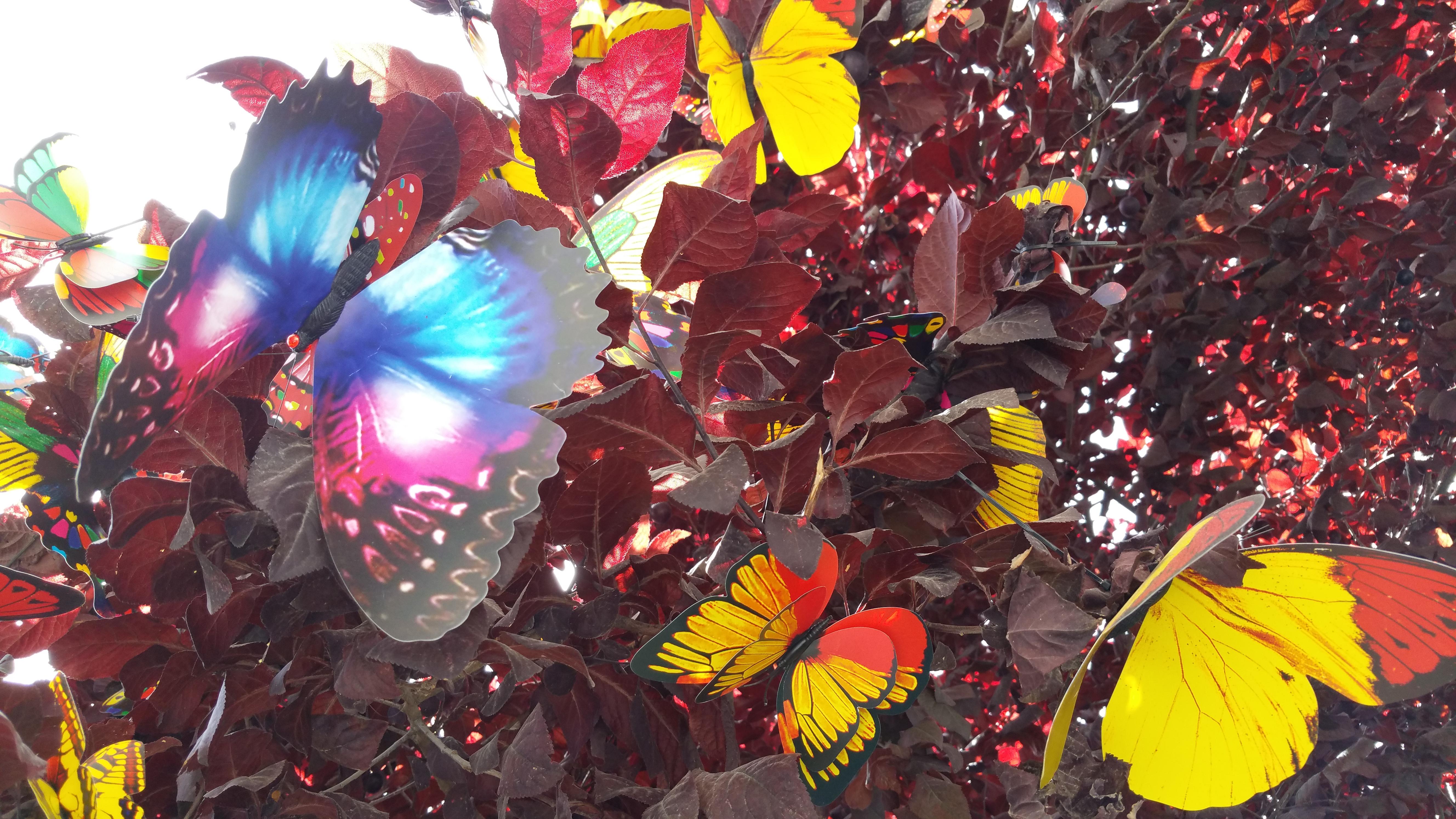 Schmetterlingstreiben