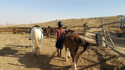 Tekoa Pferdegestüt