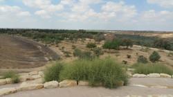Negevwüste