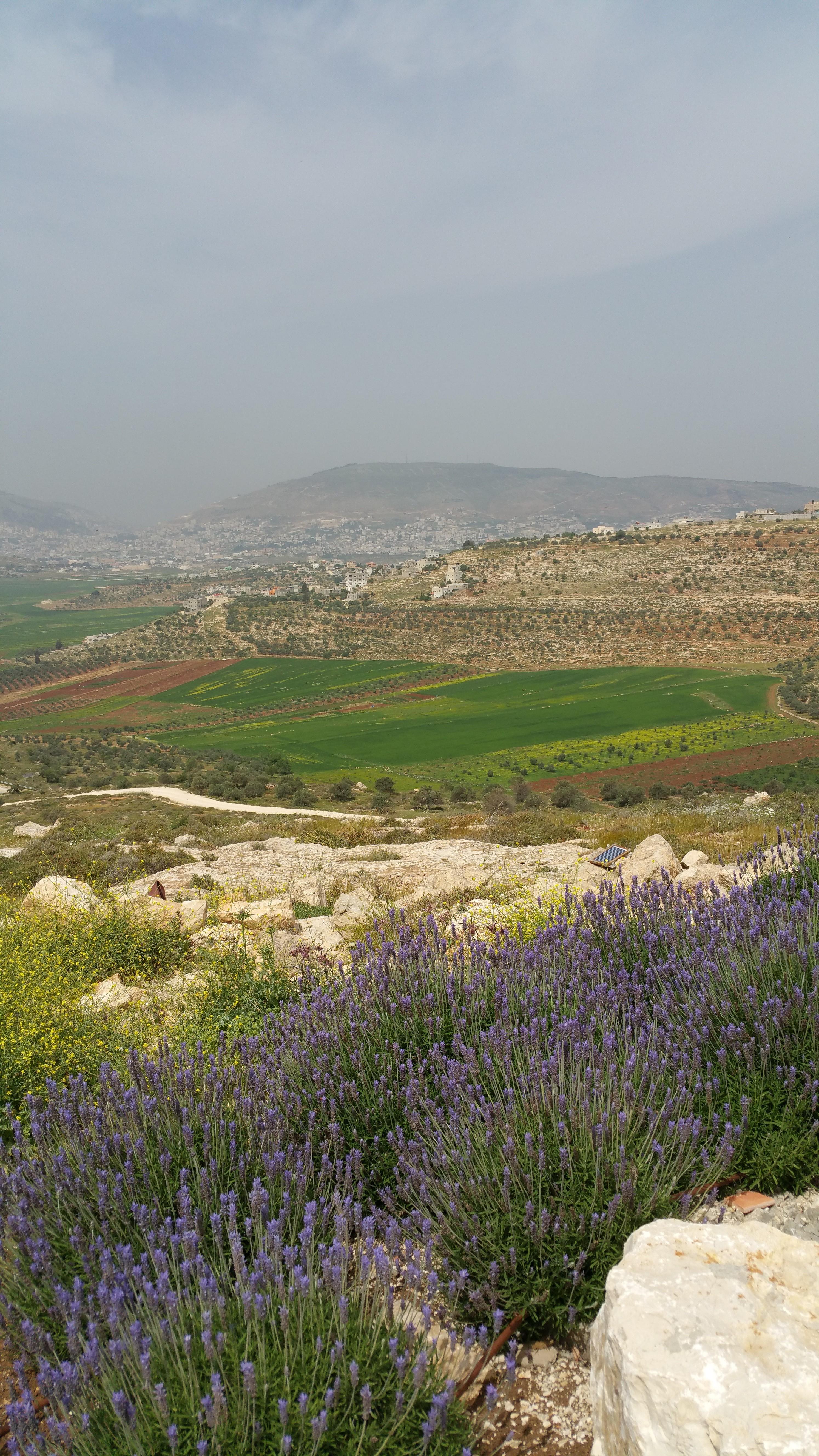 Shomron Yehuda