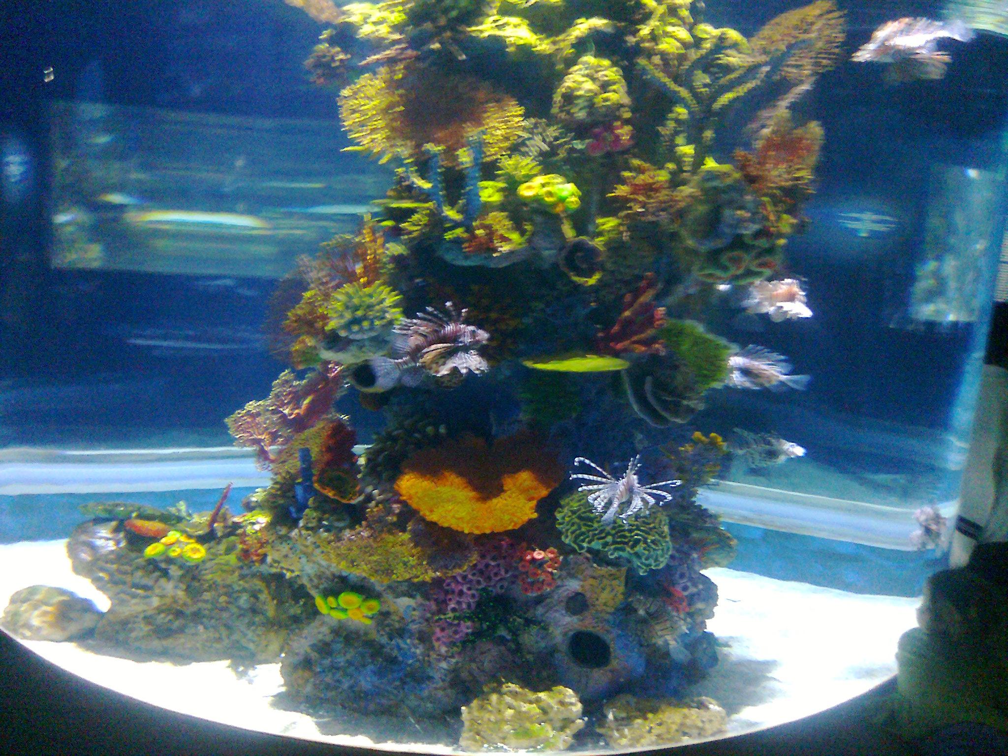 Jerusalem Aquarium
