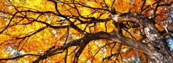 Harrisburg, NC October 22, 2012 (16)_19x