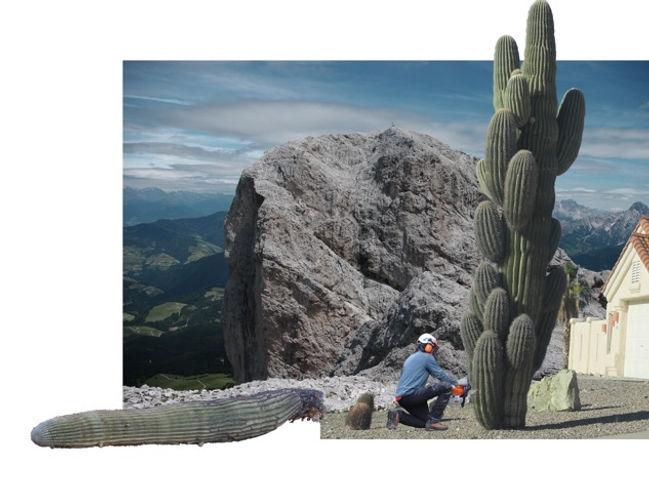 Peitler-cactus.JPEG