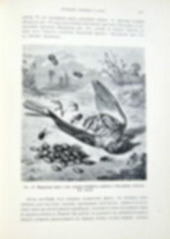 Фарб. Инстинкт и нравы насекомых. 1898 г.