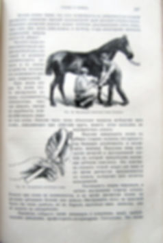 Урусов С.П. Книга о лошади. В 2-х томах. 1911 г.