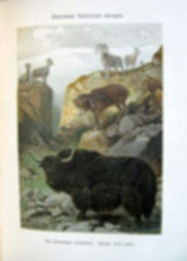 Кобельт В. Географическое распределение животных. 1903 г.