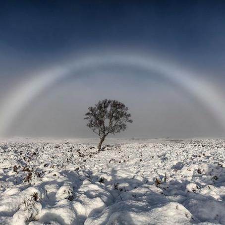 Sneeuwboog
