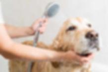 seo for dog groomers.jpg