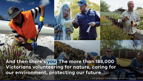 Project showcase: International Volunteer Day - Thank you Victoria's environmental volunteers