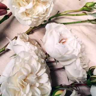 Roses 16x9.jpg