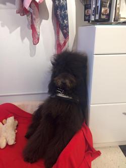HQ Wigs Mascot Dazzle