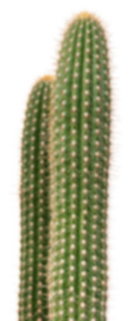 Cactus 3.png