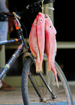 The Fishing Bike