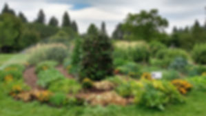 Finch Garden Summer 2019.jpg