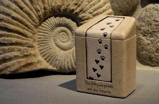 Small Pet Fossil Shot.jpg