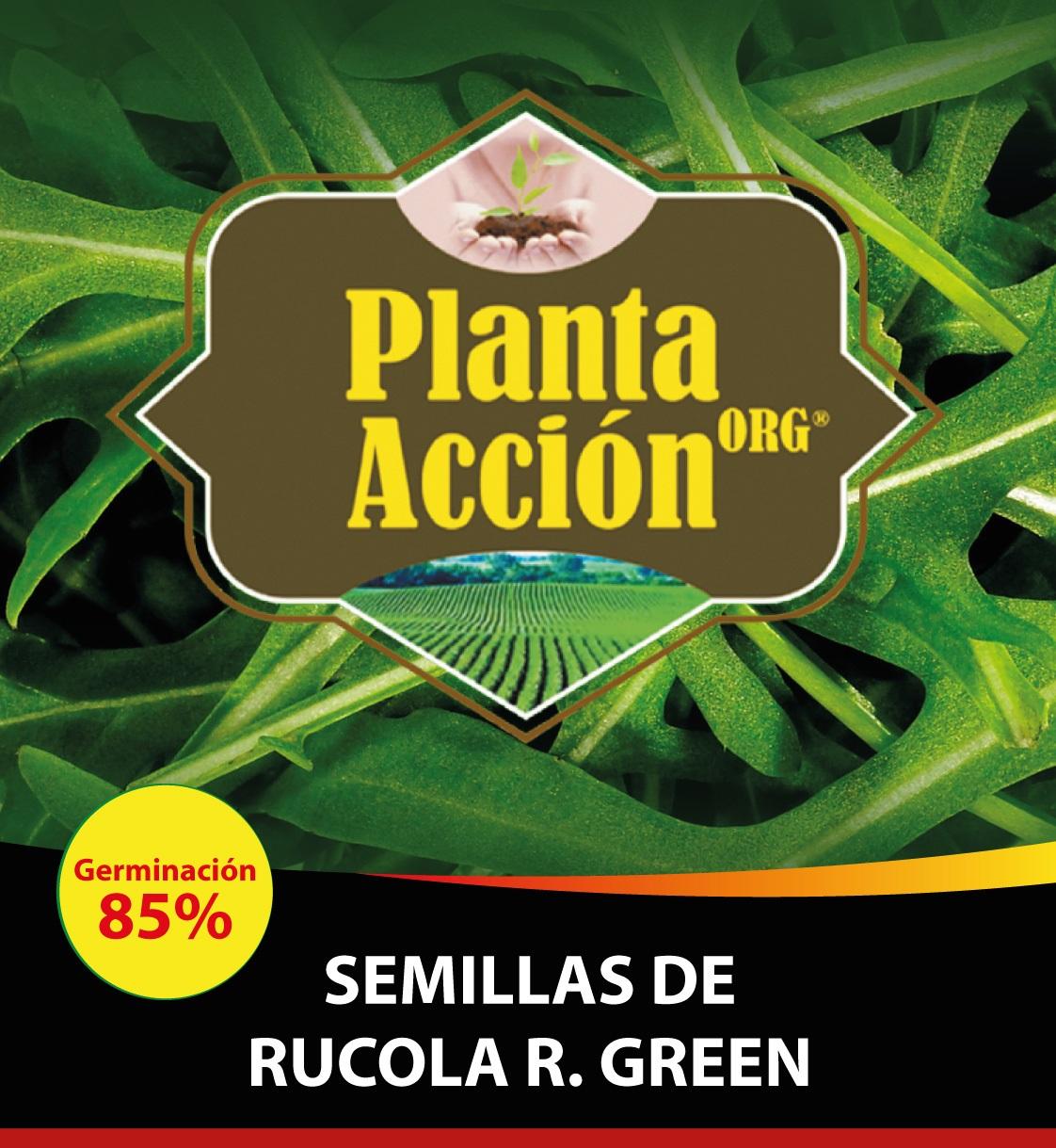 SEMILLAS DE RUCOLA R. GREEN