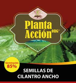SEMILLAS DE CILANTRO ANCHO