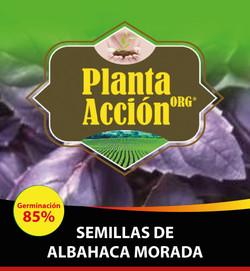 SEMILLAS DE ALBAHACA MORADA