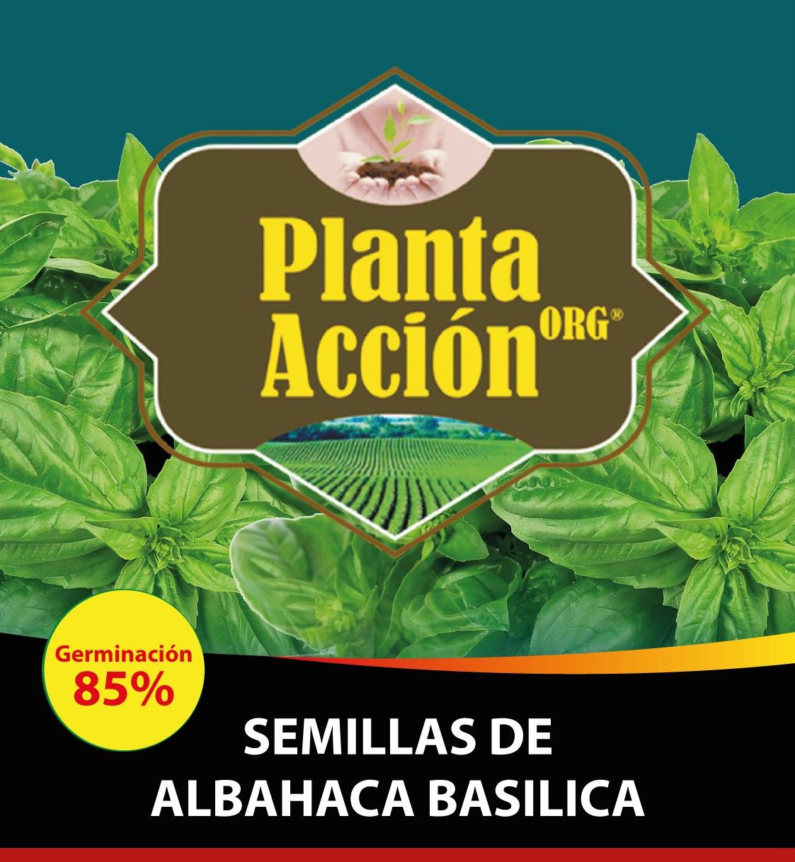 SEMILLAS DE ALBAHACA BASILICA