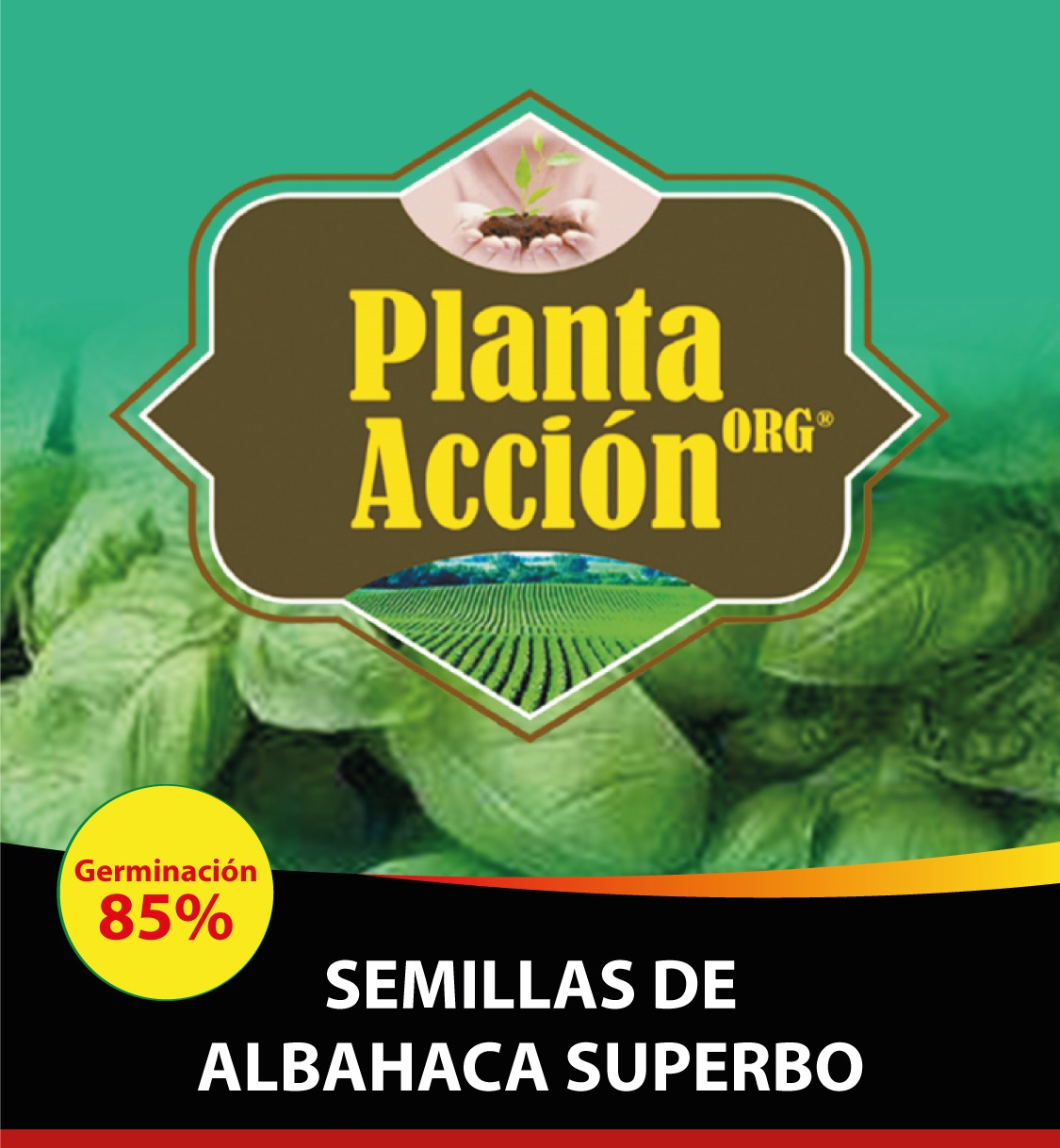 SEMILLAS DE ALBAHACA SUPERBO