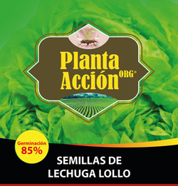 SEMILLAS DE LECHUGA LOLLO