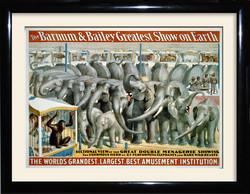 bb elephants