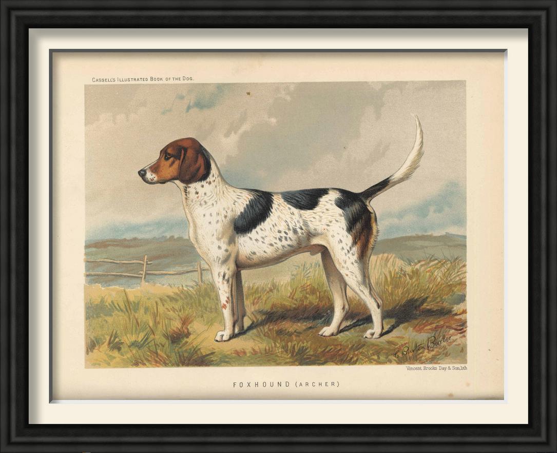 Dogs vintage framed prints5.png