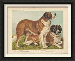 Dogs vintage framed prints1