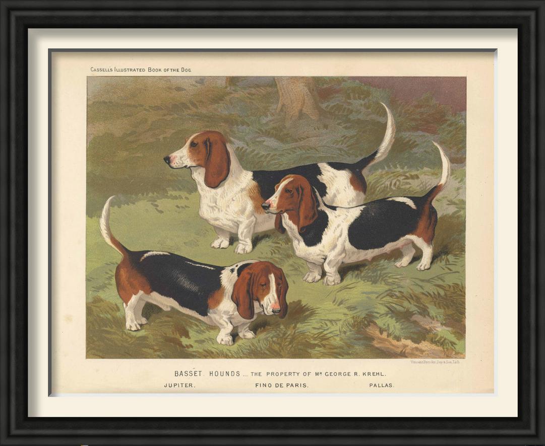 Dogs vintage framed prints4.png
