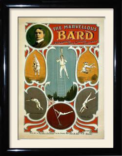 marvelous bard