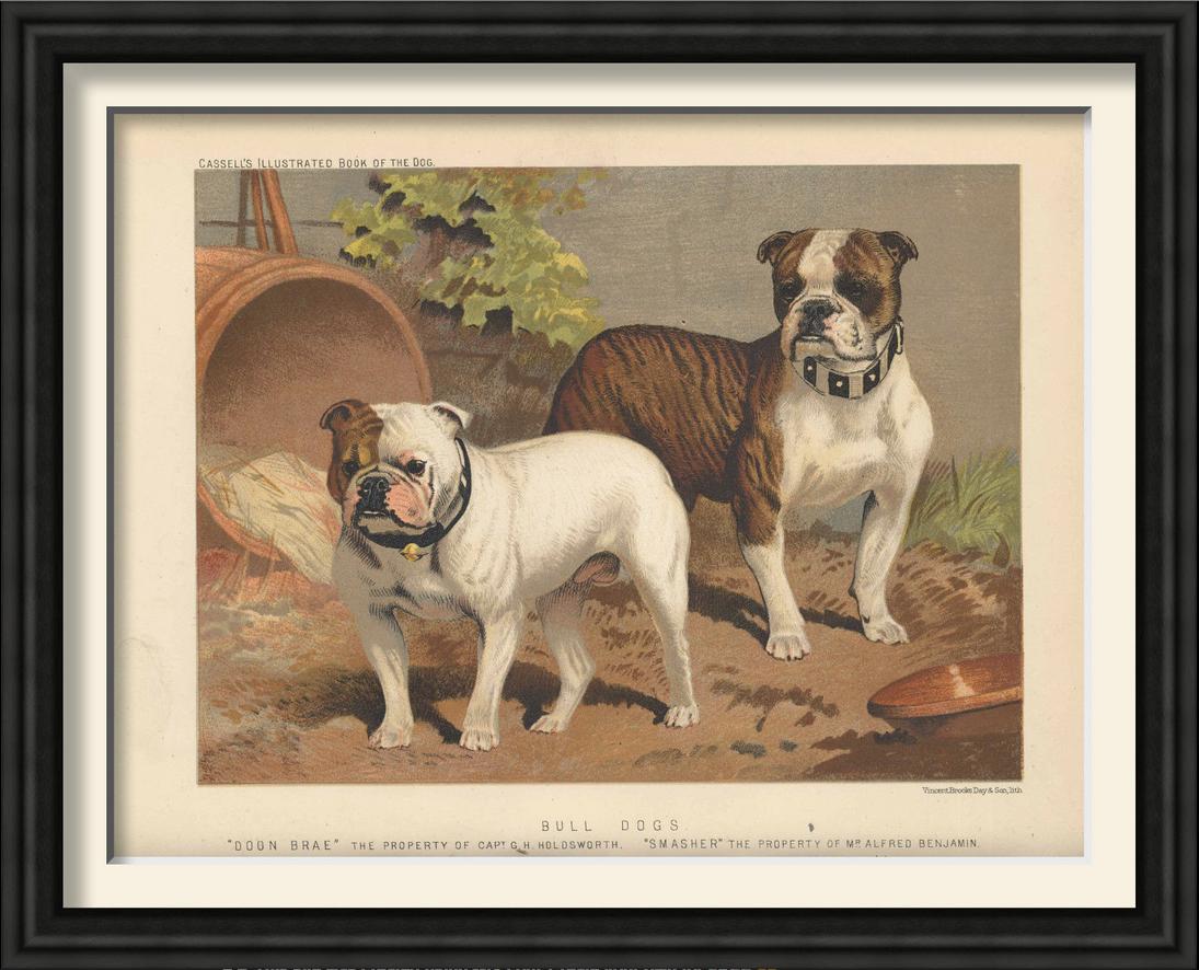framed print Bull Dogs.png
