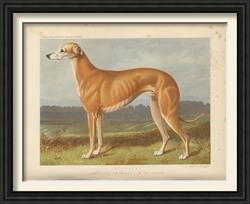 Vero Shaw greyhound.png