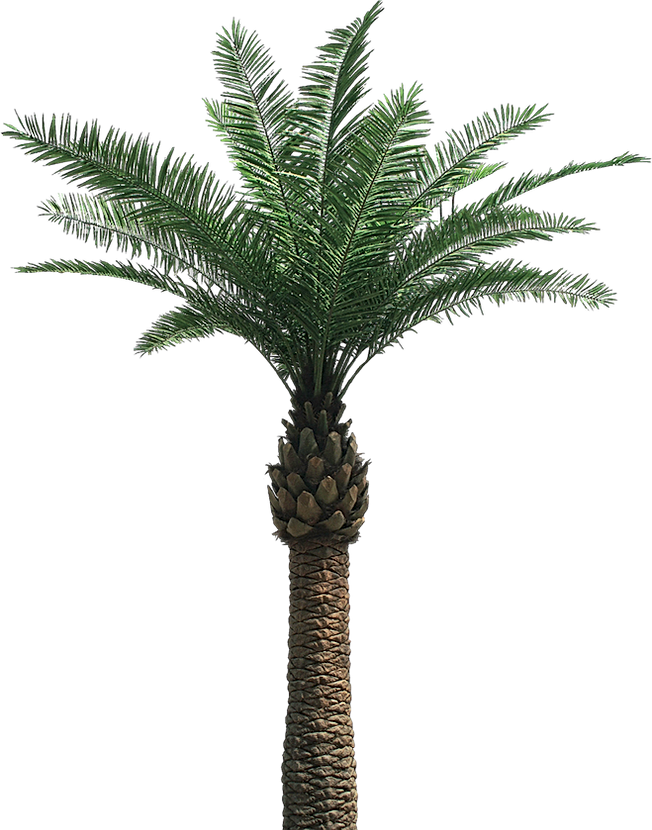 date-palm-tree-png.png