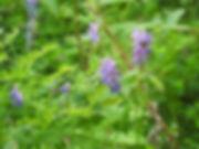 Sävfluga-thumbnail_DSCN2921.jpg