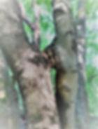 Augusti 61 Susanne (2).jpg