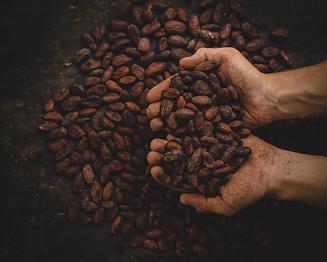 cacao.webp