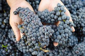 bww-grapes.jpg