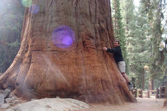 Daniel Haas Hugging a huge Redwood tree in California