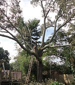 tree services, handyman Greenville