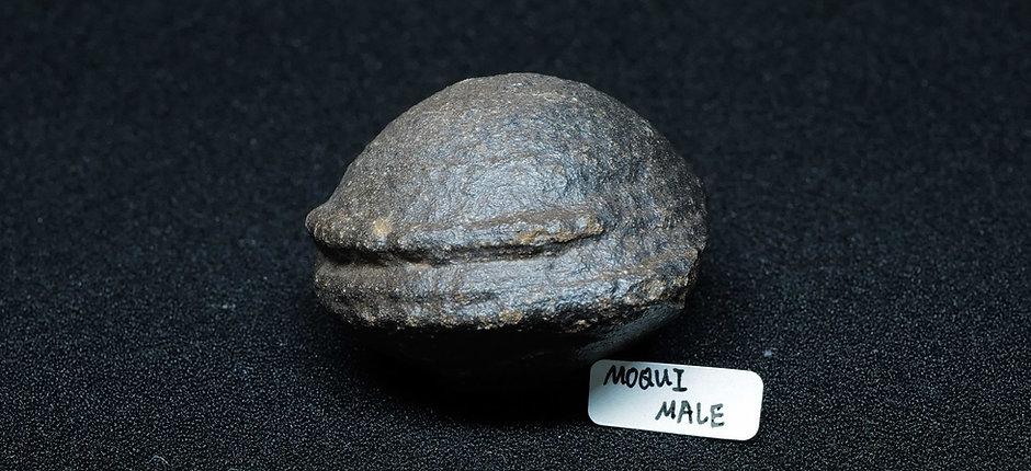 Moqui Ball Pairs (Male & Female)