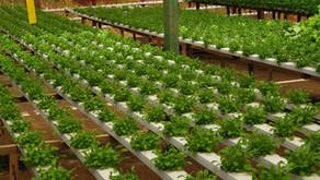 MAPA publica norma técnica para produção integrada na Olericultura