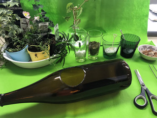 加工瓶に植物を植えてみた パート2