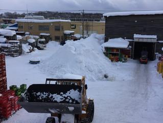 2月21日の構内の様子(雪)