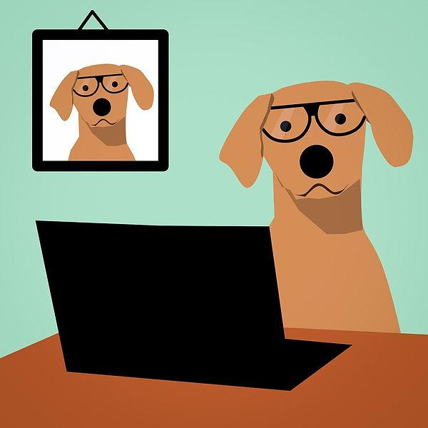 chien bureau.jpg